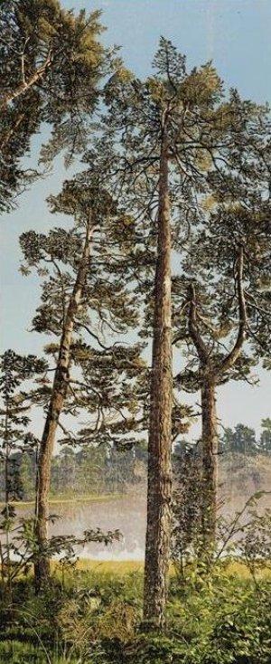 Three Trees, zomerochtend